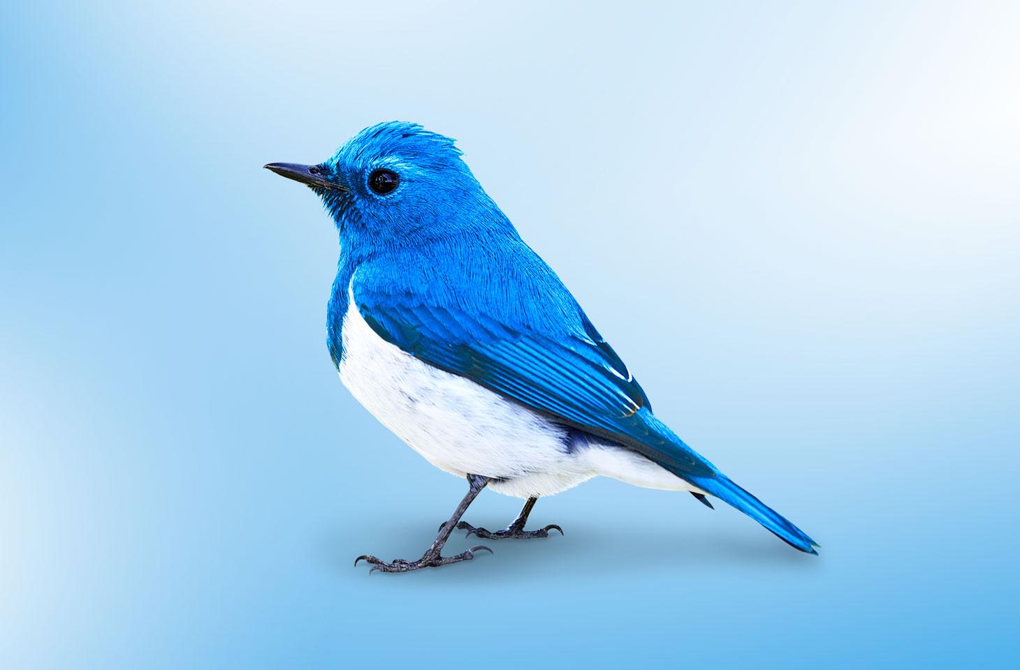 Замедление работы Твиттер